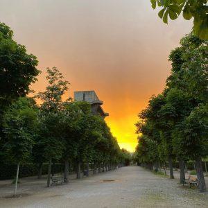 Nachdemregenkommtsonne . . #sunset #sonnenuntergang #sonne #augarten #nachdemregen #goldenhour #vienna #allee #flakturm