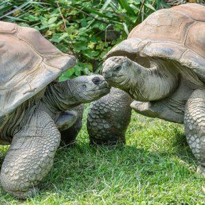 Heute ist Welt-Schildkröten-Tag! 🐢In unserer Story nehmen wir euch mit zu den Griechischen Landschildkröten und zu unseren...