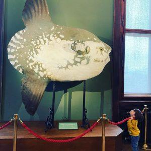 Pfoah - ist der groß #mondfisch #sonnenfisch #molamola #naturhistorischesmuseum #pfingsten #vienna #wien #austria ...