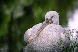 I ❤ those amazing birds #pelican #pelikan #vienna #visitvienna #wienliebe #wien #tiergartenschönbrunn #zoovienna #viennazoo #zoo #zoofotografie #zoophotography...