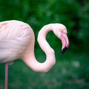 Pink beauty 💕 #flamingo #vienna #visitvienna #wienliebe #wien #zoofotografie #zoovienna #viennazoo #tiergartenschönbrunn #zoo #tierfotografie #tiergarten #zoophotography #nikon...