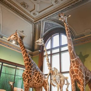 It's #WorldGiraffeDay and of course we want to show you our giraffe trio in hall 34!🦒🦒 And...