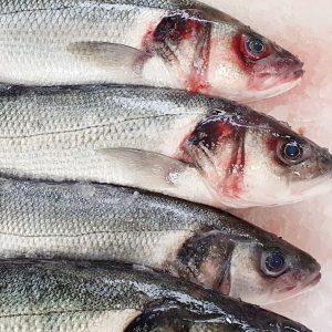 So sieht Frische aus! #wolfsbarsch #wildfang #fischgruber #fisch #naschmarkt Fisch Gruber