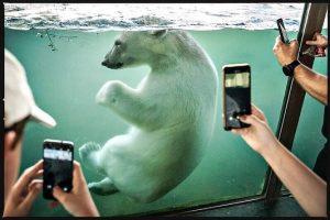 polar bear finja in tiergarten schönbrunn @zooviennaschonbrunn #polarbear #bear #ursusmaritimus #bär #eisbär #schönbrunn #tiergartenschönbrunn Zoo Vienna Schönbrunn
