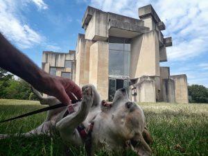 Hund an Brutalismus #fifi #chihuahua #loveandpeace #dogsofinstagram #weekend #wotruba #brutalism #architecture #vienna Wotrubakirche