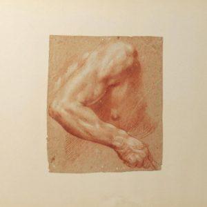 Study of a male torso. Francesco Francia, a time-fellow of Raphael, is often ...