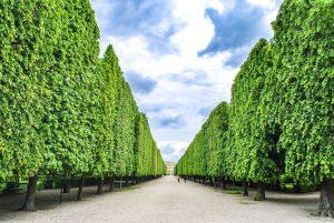 Have you noticed something special about the gardens of Schloß Schönbrunn? Around 1750, ...