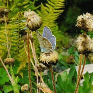🦋 #travel #wien #vienna #austria #travelblogger #travelgram #travelphotography #garden #flowers #butterflies #butterflygram #butterfly Botanischer Garten der Universität...
