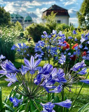 Late Summer Days #botanischergarten #botanicalgardens #belvedere #schlossbelvedere #latesummerdays #summerinvienna #flowergram #flowers #flowersofinstagram #septemberinvienna #wienliebe #viennatouristboard #viennagram #igersvienna...