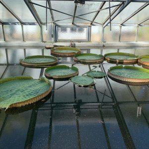Bild des Tages 10.9. Botanischer Garten der Universität Wien