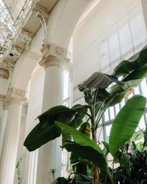 ein bisschen tourist spielen. #tasteofvienna @palmenhausbrasserie #visitvienna #breakfast #palmenhaus #palmen #vienna #viennaloveslocals #igersvienna #weekend #wien #wienliebe #architecture...