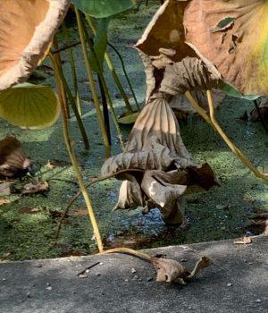 Bild des Tages 18.9. Botanischer Garten der Universität Wien