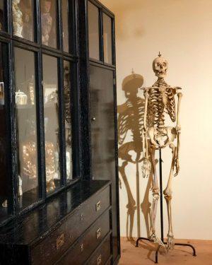 Skeleton mode on 💀#medical #medicine #nursing #nurse #skeleton #anatomy #bones #austria #vienna #cyprus ...