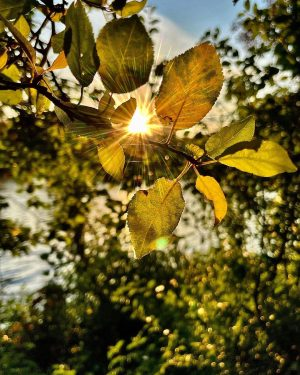 Herbstfarben 🍂 #herbst #herbstfarben #changingleaves #sonnenstrahlen #sunray #sunfilter #lenslight #autumncolors #autumnlover #autumnvibes #autumnshooting ...
