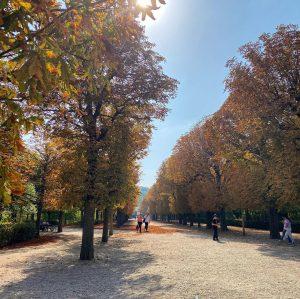 Autumn is here. Wien, Schönbrunn #herbst #autumn #fall #wien #schönbrunn #park #trees #hietzing #bzshare #stadtwien #wienstagram #viennagram...